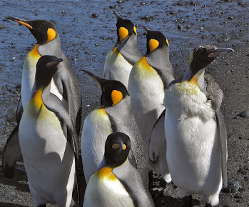 Sub-Antarctic 2011