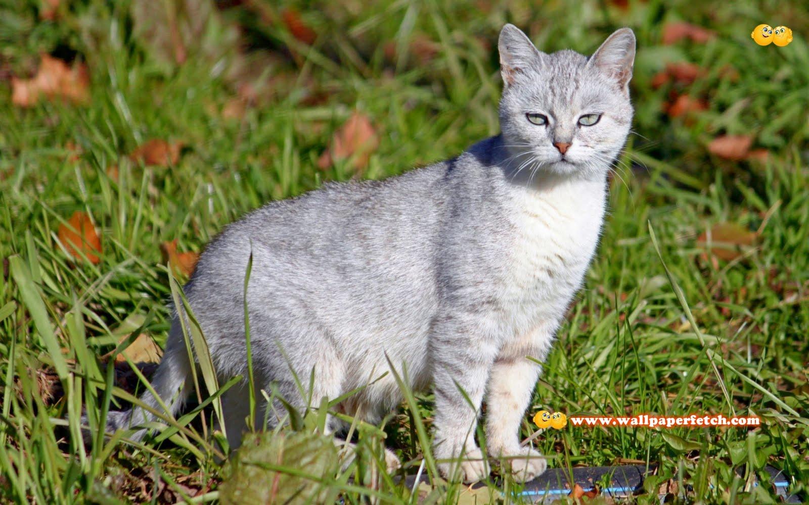http://2.bp.blogspot.com/-joF7fKjLnCE/TyFWNzb7CQI/AAAAAAAAE2E/ZllMGsd-vGc/s1600/SuperPack_Beautiful_Animals_HD_Wallpapers_Part_32.49.jpg