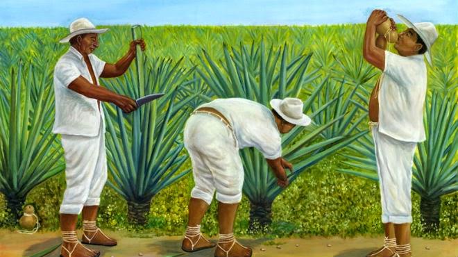 El 'oro verde' de Yucatán: el henequén (Ki) | Tendencias