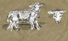 Sketch book sheep. Yorkshire