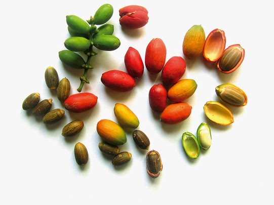 Manfaat Dan Kandungan Nutrisi Pada Sayur Asem