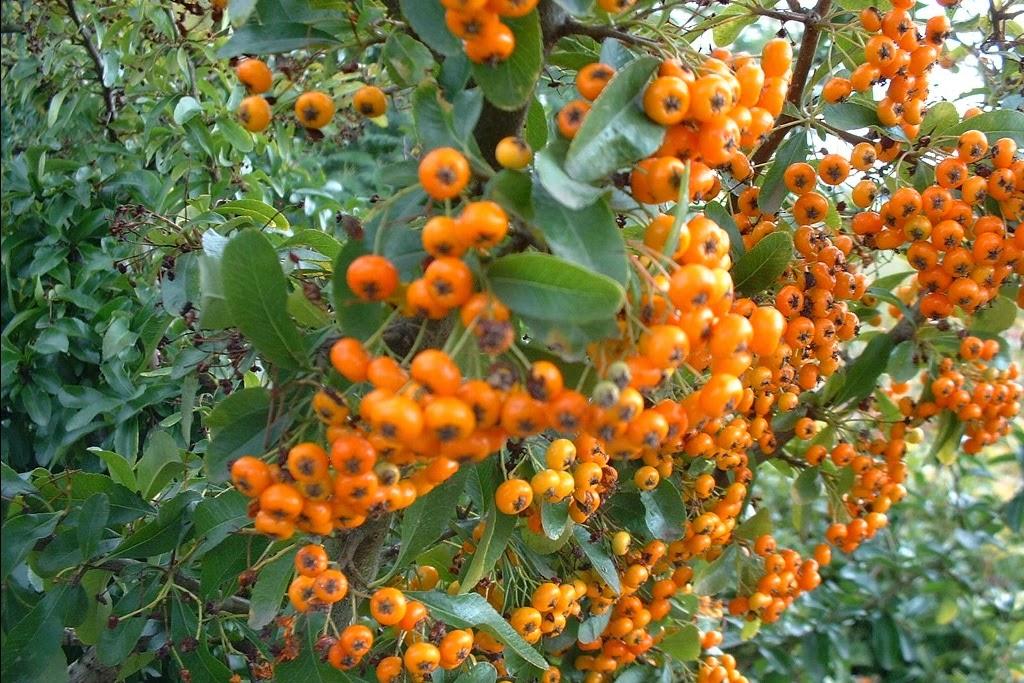 Mon arbre le de vivre le douaire comment fleurir son for Fleurir son jardin