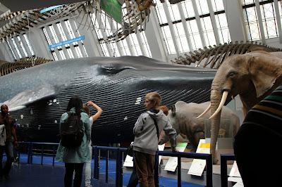 Mamíferos Museo Historia Natural Londres