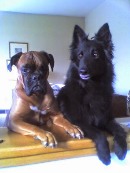Amos & Ziggy