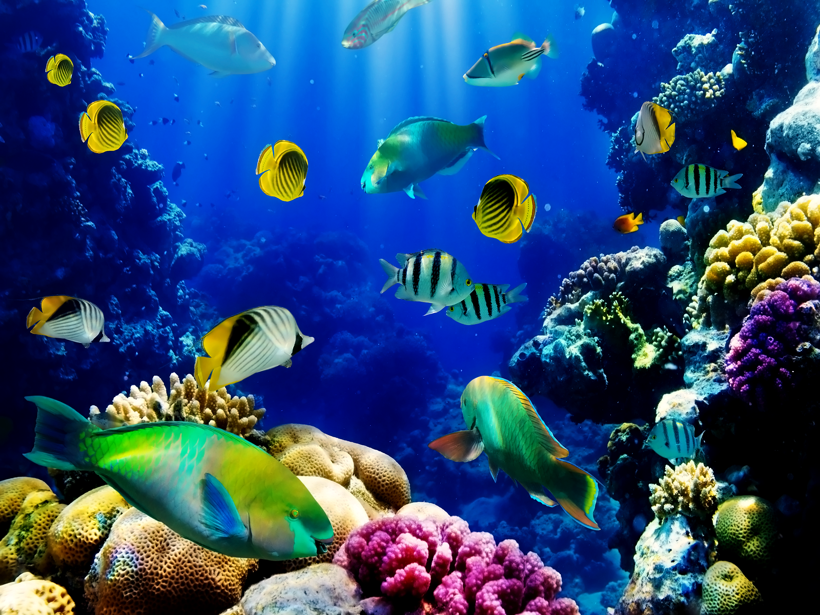 Download image Fish Aquarium Live Wallpaper PC, Android, iPhone and ...