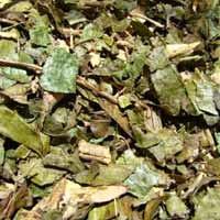 Folhas de Porangaba