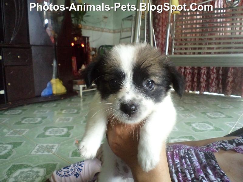 http://2.bp.blogspot.com/-jpSH8dYmp6Y/TeXiJeWdfkI/AAAAAAAABN0/I3rzktrseec/s1600/Puppies%2Bcute_0001.jpg
