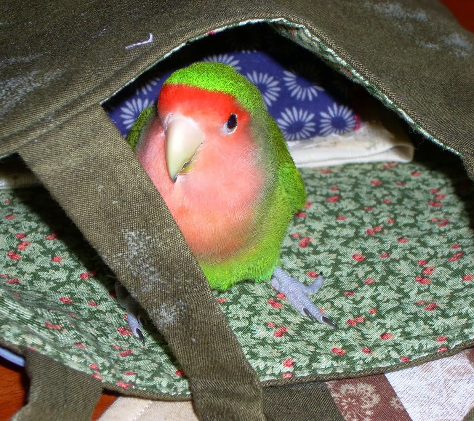 Bob in a bag