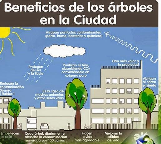 Beneficios Árboles en la Ciudad