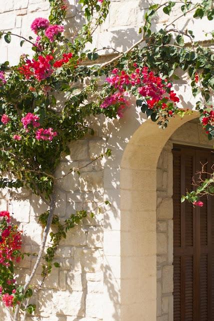 Бугенвиллия - одно из самых популярных растений в Греции