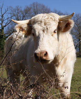 Tiere sind meine Freunde, und ich esse meine Freunde nicht.   George Bernard Shaw