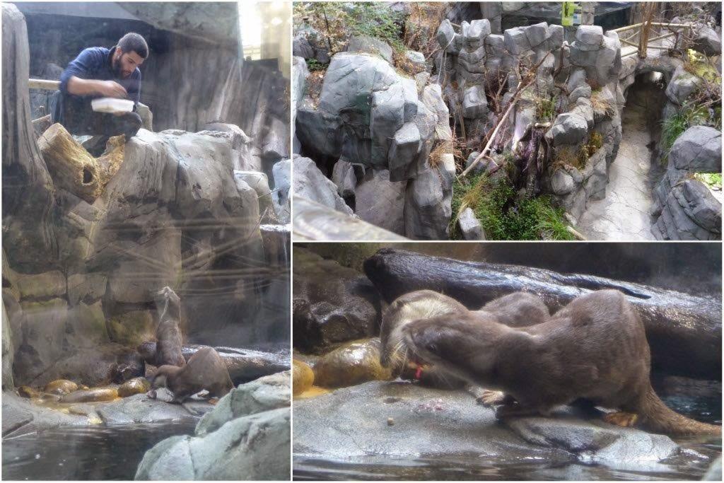 Nutrias comiendo en el Acuario de Gijon