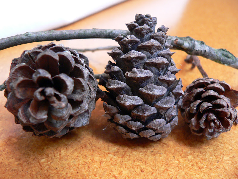 These things pine cone project for Things to make with fir cones