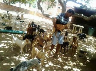 Conheça canil que abriga mais de 100 cachorros em Nova Floresta