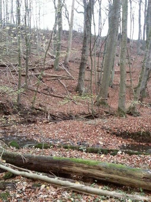 Umgefallene Bäume im Wald