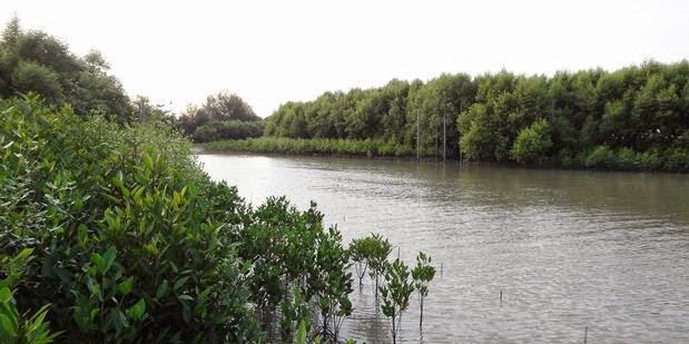 Mangrove Tours Kampoeng Nipah Northern Sumatra
