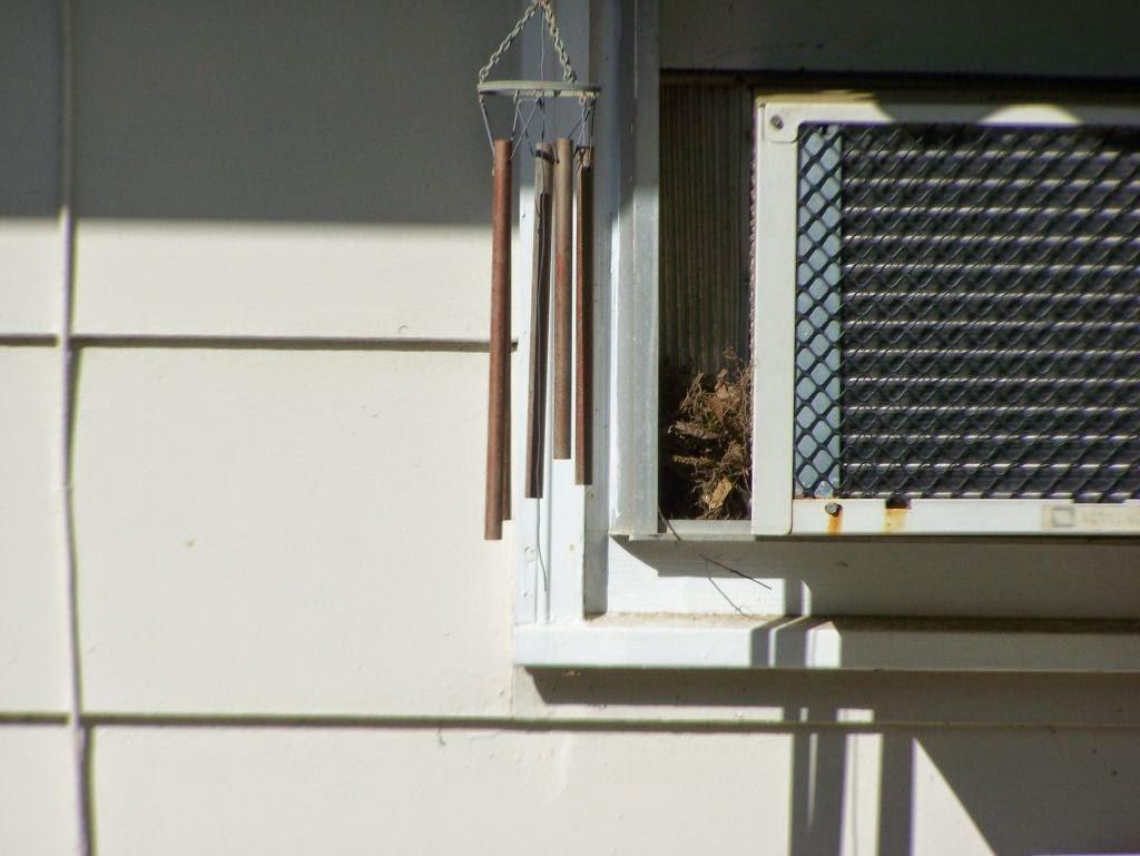 Wall Vent Extender The Quiet Life: The Carolina wren is expanding her nest ...