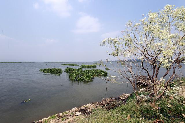 Lac de Thailande