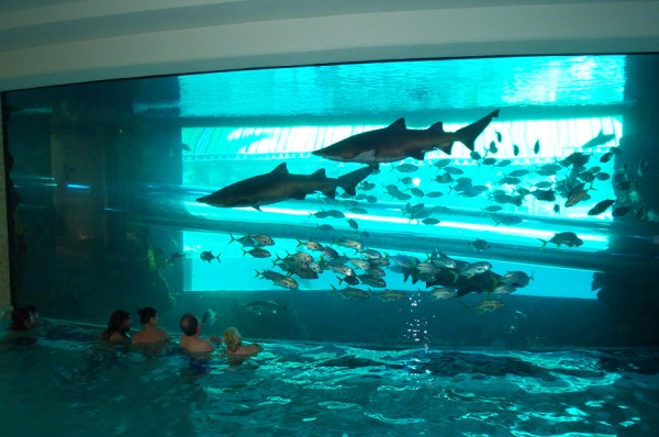 diseño de piscina original