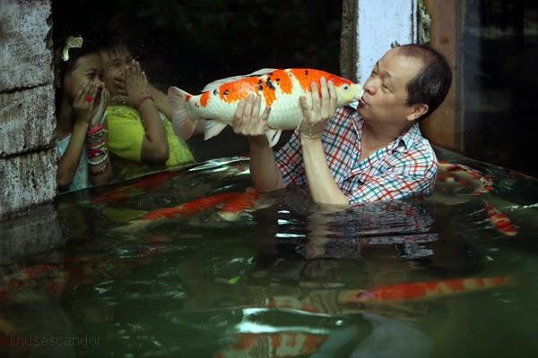 Linus escandor photojournalist malabon zoo for Carpe koi aquarium