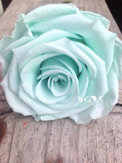 rosa preservada mint