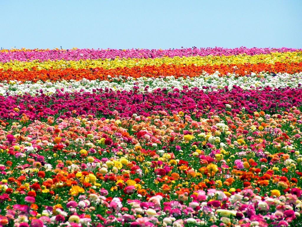 Regalopolis il colore dei fiori - Immagini di fiori tedeschi ...