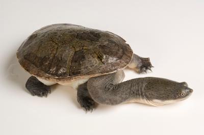 Jenis kura kura muhammad haekal for Acquario per tartarughe