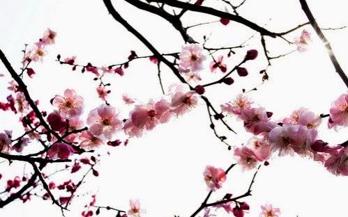 Makeup reen - Branche de cerisier japonais ...