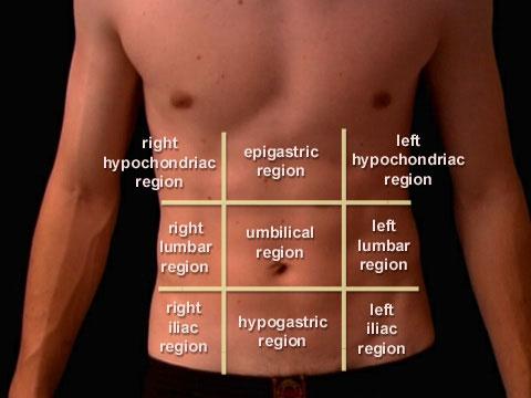 Anatomi Dinding Abdomen | Ilmu Pengetahuan