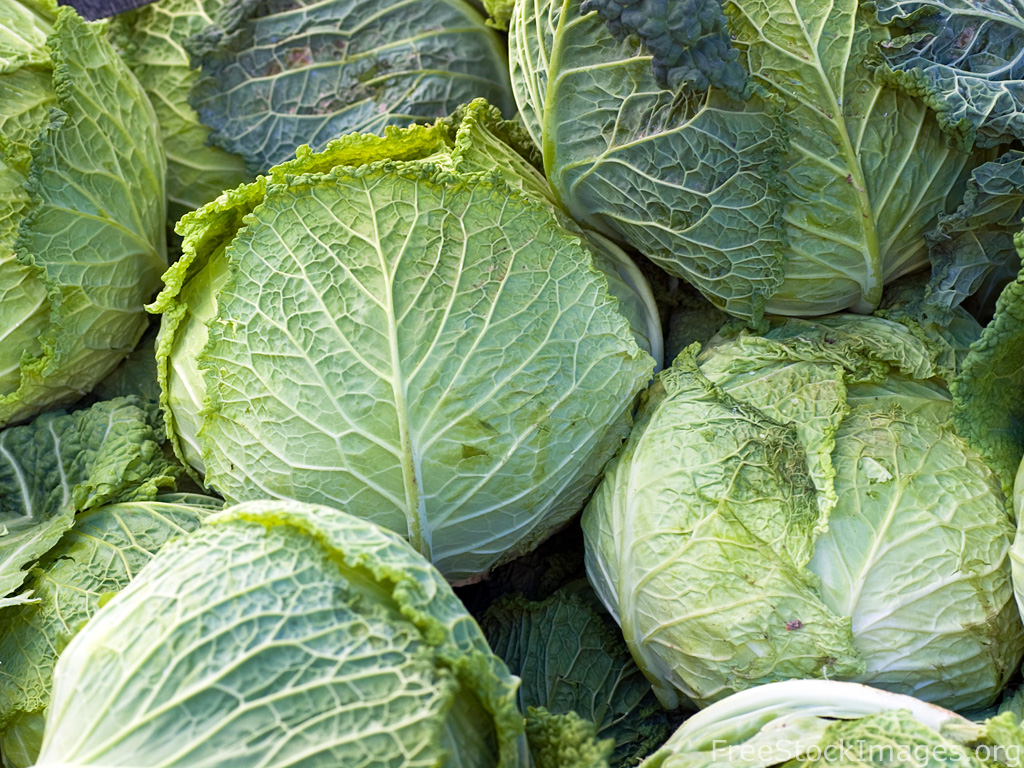 royalty-free-food-image-cabbage.jpg (1024&#215;768)