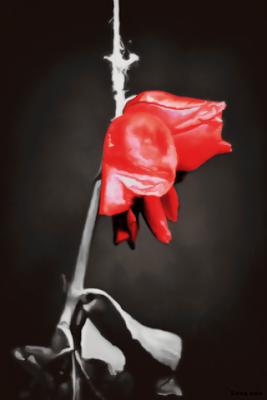 خلفيات ورود حمراء