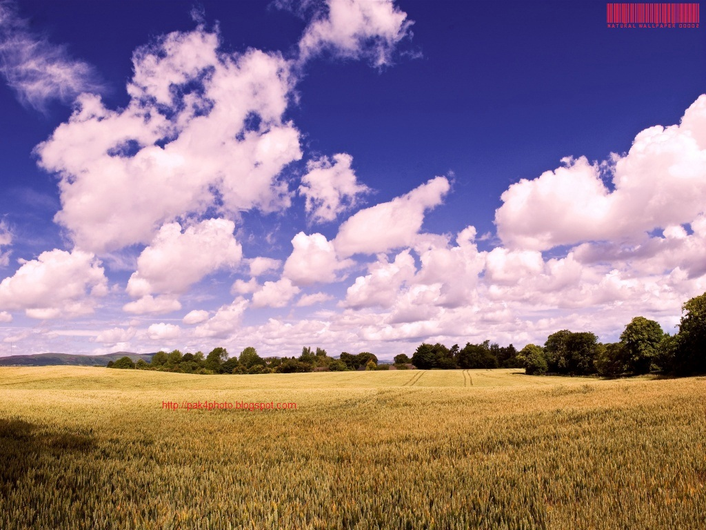 latest hd wallpaper for , windows 7 , windows xp , hd wallpaper