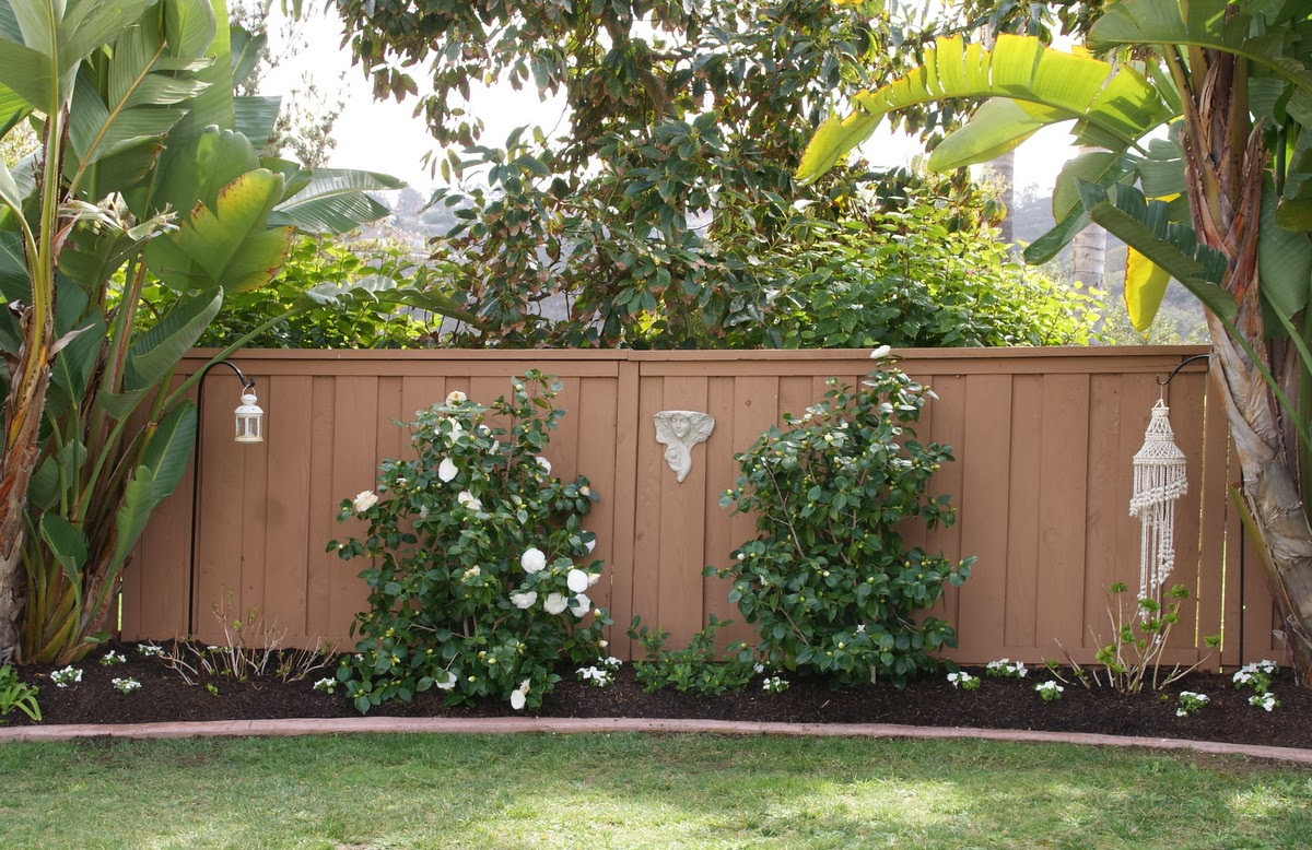Organic Garden Dreams: My White Camellias are in Bloom!