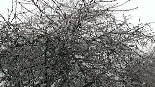 tree covered in glazed ice