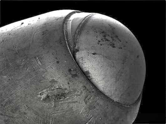 Ballpoint Pen Microscope