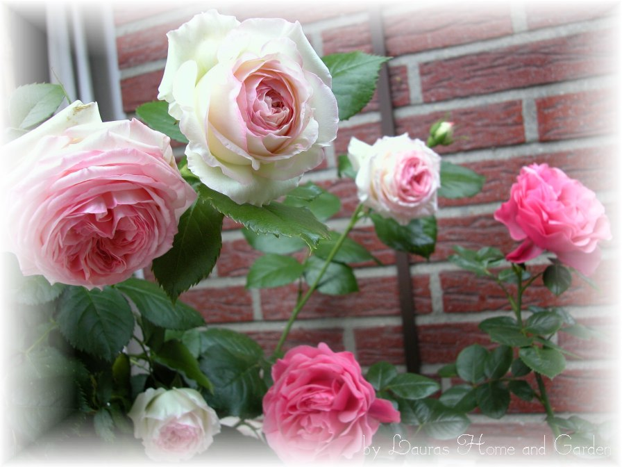 lauras home and garden rosen und lavendel. Black Bedroom Furniture Sets. Home Design Ideas