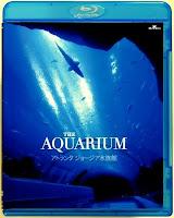 The Aquarium 2007
