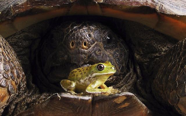 Best Jungle Life tortoise, frog wallpaper, tortoise wallpaper, giant