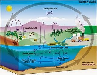 Biosfer dan 5 Ciri Makhluk Hidup