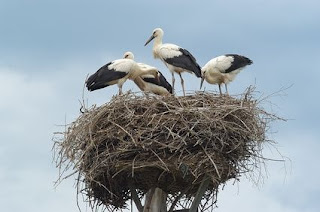 Birds Standing in Nest