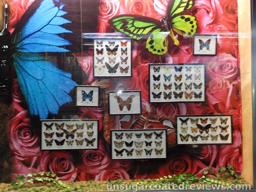 mounted butterflies