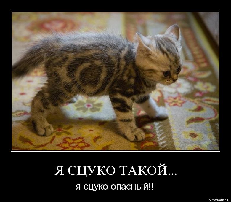 http://2.bp.blogspot.com/-jvScCjeMqaU/TbvRi0YZYzI/AAAAAAAAAko/0ECQJWLshbc/s1600/cat_demotivator.jpg