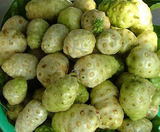 Noni fruit contains Polysaccharide
