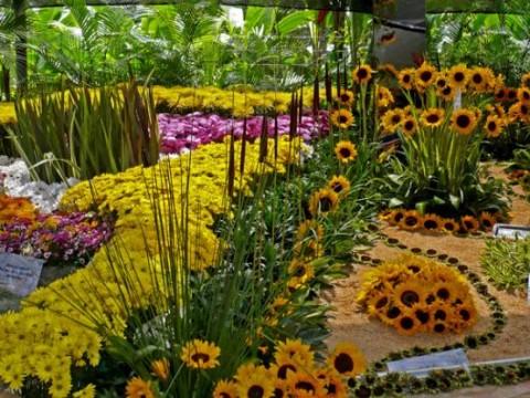 Biodiversidad pmfs for Bodas en el jardin botanico medellin