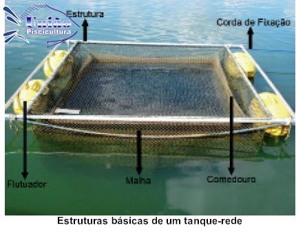 Tudo sobre como criar tilapia ajuda piscicultor for Como criar tilapias