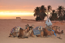 Desierto de Douz