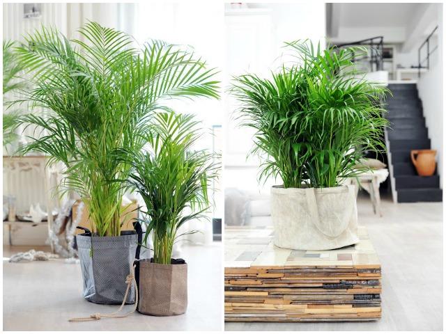 Decoraci n f cil 10 plantas que purifican el ambiente for Plantas de purificacion