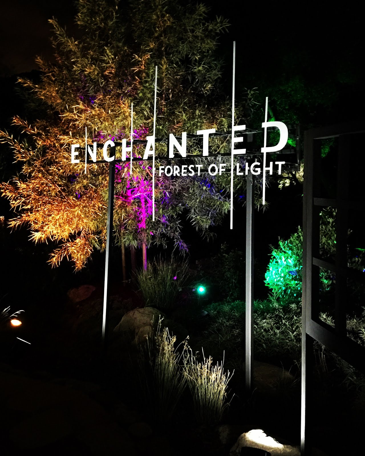 Cobalt Violet Goodbye 2016 Descanso Gardens Enchanted Forest Of Light And 2016 Goodbyes