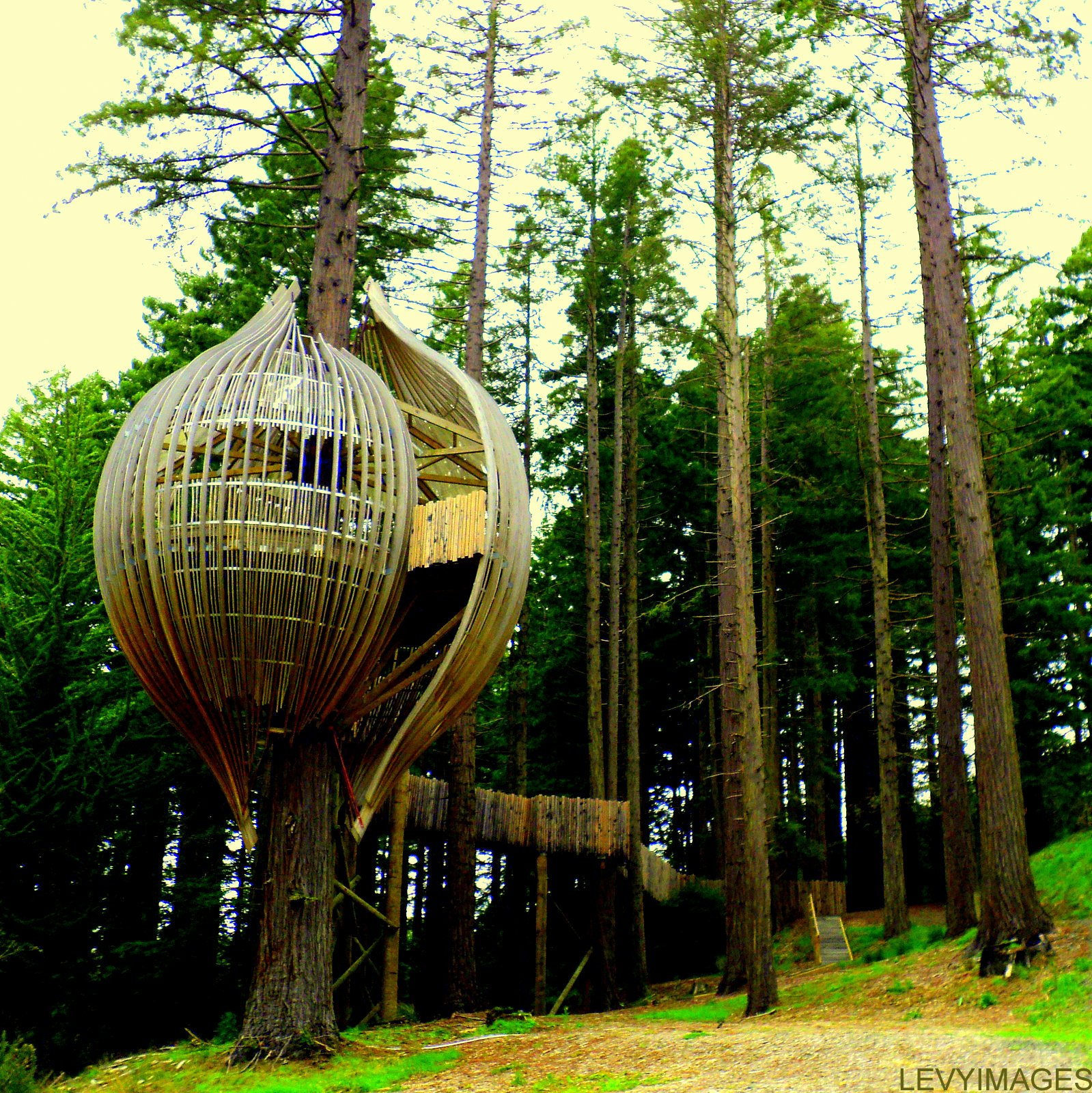 A few hundred feet from State Highway One near Warkworth in New Zealand's  Northland is this stunning treehouse restaurant. Constructed around 2008  for use ...