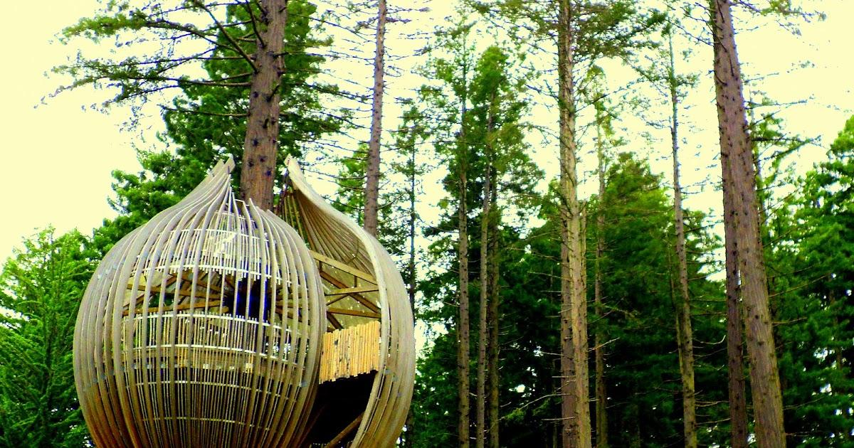 redwoods yellow treehouse restaurant